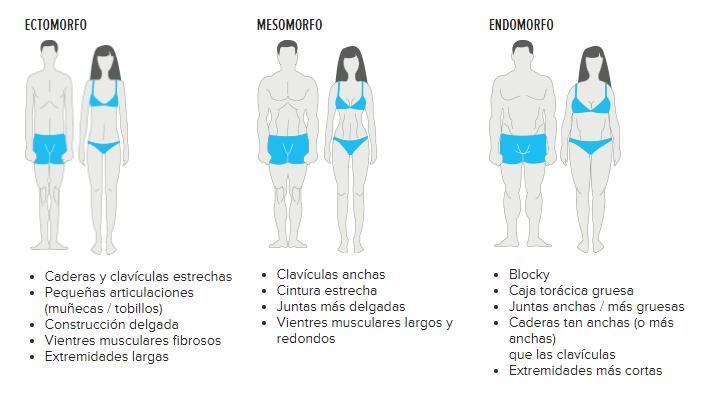 Tipos de cuerpo resumen ectomorfo, mesomorfo y endomorfo